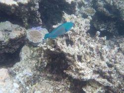Great Barrier Reef near Cairns
