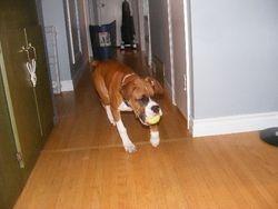 Layla loves fetch