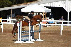 Making easy work of the show jumping