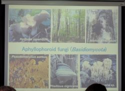 Sergey Volobuev: distribution of rare and protected aphyllophoroid fungi in Middle Russian Upland