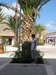 Tommy by a palm tree