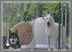 Simiki & White Fang