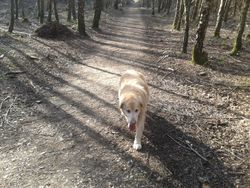 Dog Walking in Crowthorne Woods