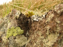 Lichens  May