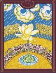 35 PA NA la fleur de lotus
