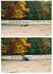 Horse rolling in the dirt