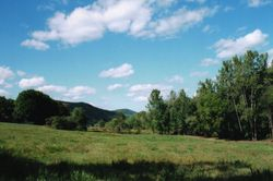 The North Pasture