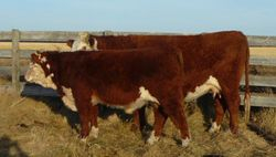 Dam of Lot 1 With 181X at side