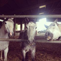 Three little ponies