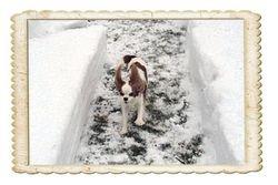 It is winter fun...