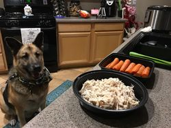 Einstein was happy I used an Instant Pot to boil chicken breast and steam carrots for him!