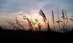 Sunrise through the Sea oats
