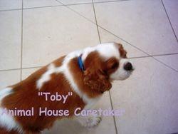 """""""Toby"""""""