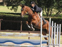 Dusky Farm Jane and Colleen in round 1 of the 4yo Young Jumping horse. Pic Jenny Carroll