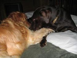 Palmer and Barkley playing on the bed