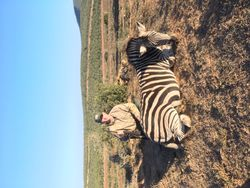 Jake and Zebra