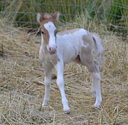 mini colt born 6/19/13