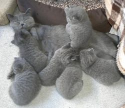 Belle cuddling her litter of 7.