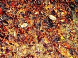 Old Autumnal leaves