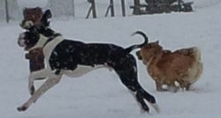 At the off leash in Brookswood enjoying the snow