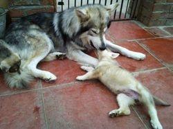 Crystal & Shaman Pups 2012