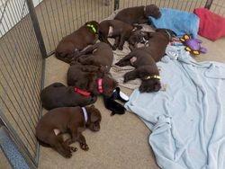 Pups snuggle in
