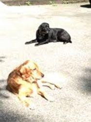 Marley and Barkley