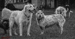 Schneider,Abby,Huck