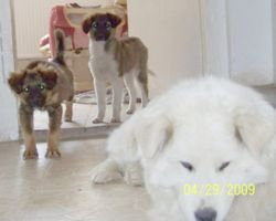 Pippy and poppy sneaking up on Misty