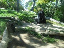 San Diego Zoo 2