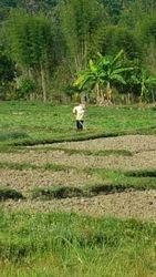 Farmer at Pabong Village
