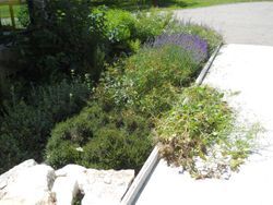 Library garden and pile of weeds