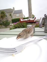 A sparrow joined me for tea