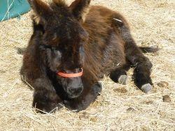 Baby Christmas donkey