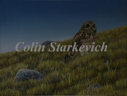 "The Edge of Night - Short-eared Owl (18 by 24"" acrylic on masonite)"