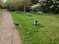 Ickworth Park with Diesel