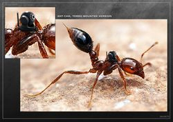 Ant Camera #1