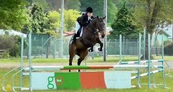 Show Jumping - NZPC80