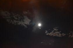 Blue moon close up.