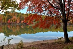 Lake Needwood, Autumn 3