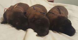 puppy heads 9 days old