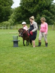 Families together enjoying Pony Goodness