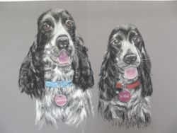 DOUBLE SPANIELS