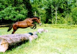 Sparky as a yearling