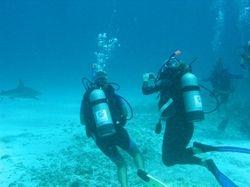 Ann videoing the reef shark
