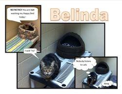 Office Cat Belinda