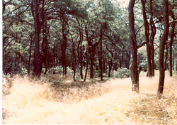 Cape Cod Meadow