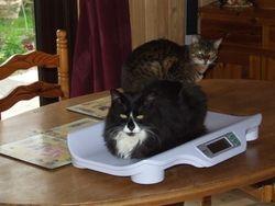 Bertie and Simba
