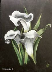 Calla Lillies in Colour