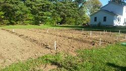 Bigger garden this year!